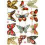 Vintage plaatjes, vel 16,5x23,5 cm, vlinders, 3vellen